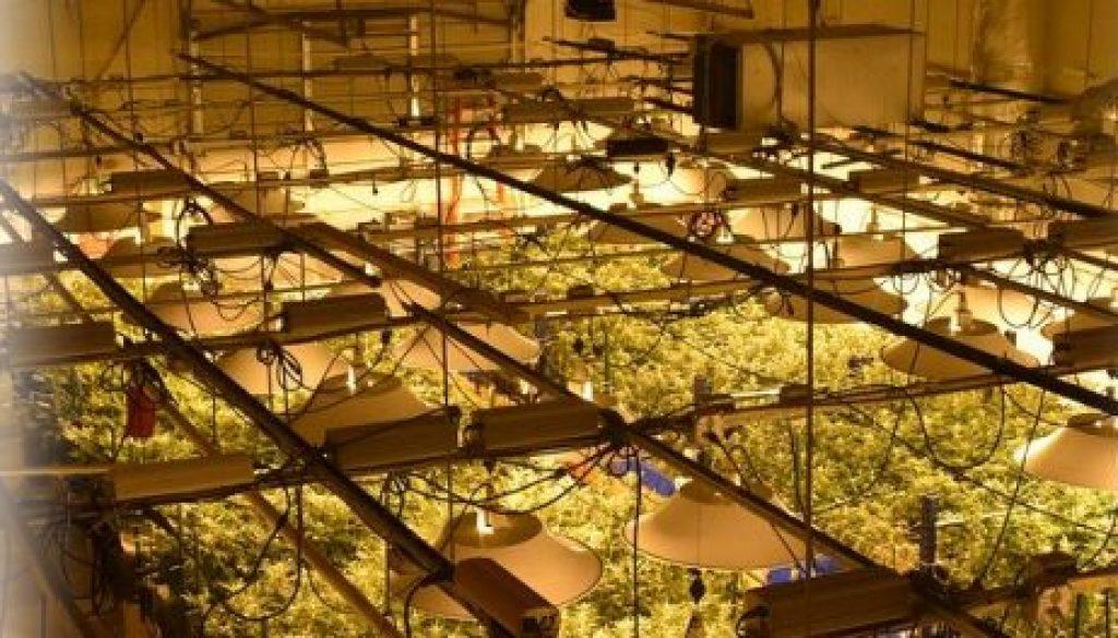 cannabis-services-header-17